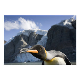 Antarctica, South Georgia Island UK), King 4 Photo Art