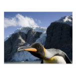 Antarctica, South Georgia Island UK), King 4 Postcard