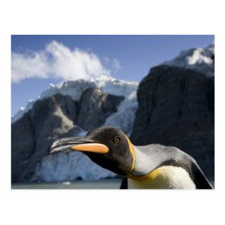 Antarctica, South Georgia Island UK), King 4 Post Cards
