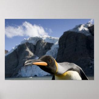 Antarctica, South Georgia Island UK), King 4 Poster