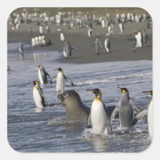Antarctica, South Georgia Island (UK), King 4 Square Sticker