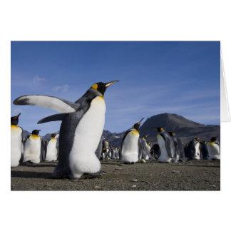 Antarctica, South Georgia Island (UK), King 5 Greeting Card