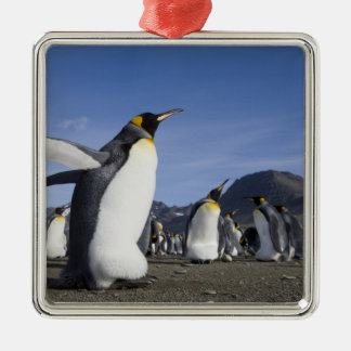 Antarctica, South Georgia Island (UK), King 5 Christmas Ornament