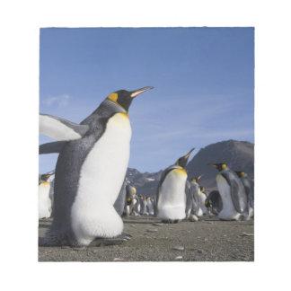 Antarctica, South Georgia Island (UK), King 5 Notepad
