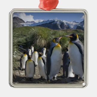 Antarctica, South Georgia Island UK), King 6 Christmas Ornament