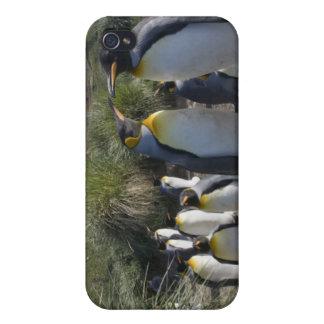 Antarctica, South Georgia Island UK), King 6 Cover For iPhone 4