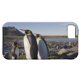 Antarctica, South Georgia Island (UK), King 6 iPhone 5 Case