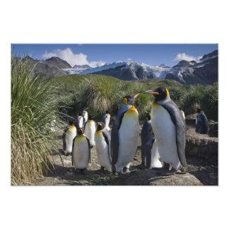 Antarctica, South Georgia Island UK), King 6 Photograph
