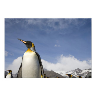Antarctica, South Georgia Island UK), King 7 Photo Print