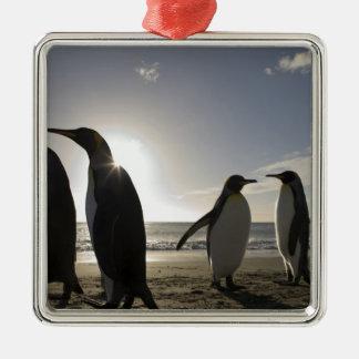 Antarctica, South Georgia Island UK), King 7 Silver-Colored Square Decoration