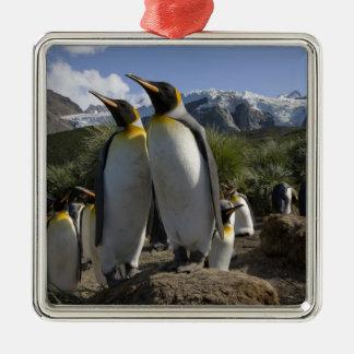 Antarctica, South Georgia Island (UK), King 7 Silver-Colored Square Decoration