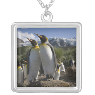 Antarctica, South Georgia Island (UK), King 7 Silver Plated Necklace