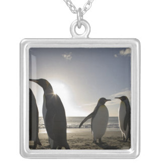 Antarctica, South Georgia Island UK), King 7 Silver Plated Necklace