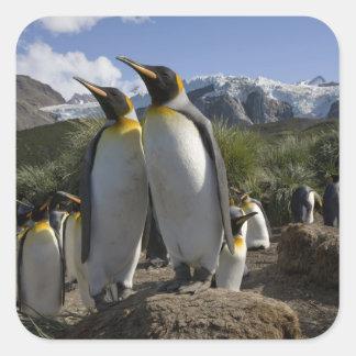 Antarctica, South Georgia Island (UK), King 7 Square Sticker
