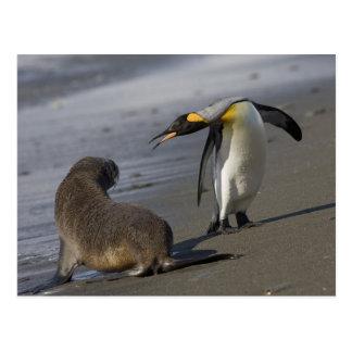 Antarctica, South Georgia Island (UK)King Postcards