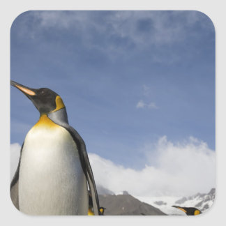Antarctica, South Georgia Island UK), King Square Sticker