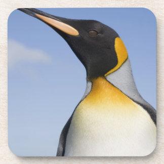 Antarctica, South Georgia Island (UK), Portrait Coaster