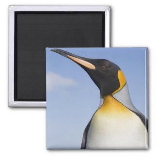 Antarctica, South Georgia Island (UK), Portrait Magnet