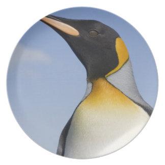 Antarctica, South Georgia Island (UK), Portrait Plate