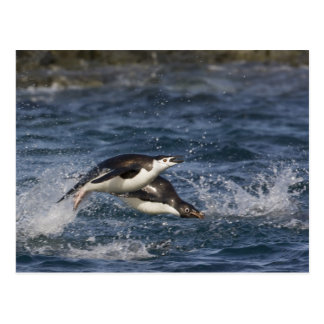 Antarctica, South Shetland Islands, Gourdon Postcard