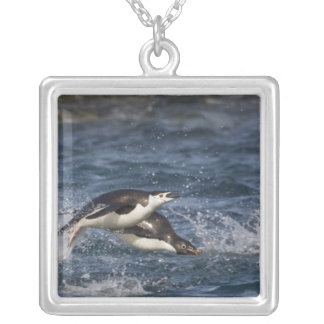 Antarctica, South Shetland Islands, Gourdon Silver Plated Necklace