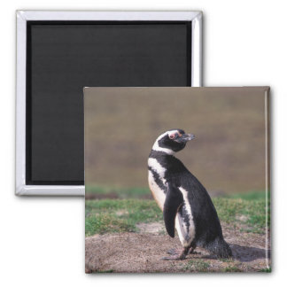 Antarctica, Sub-Antarctic Islands, South 2 Square Magnet