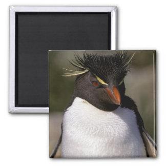 Antarctica, Sub-Antarctic Islands, South 5 Magnet