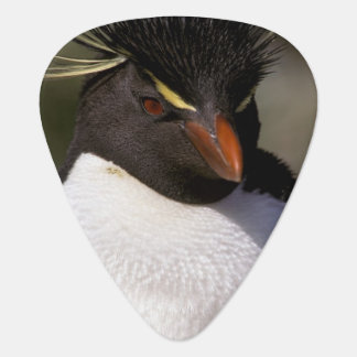 Antarctica, Sub-Antarctic Islands, South 5 Plectrum