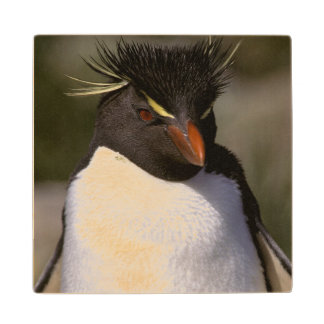 Antarctica, Sub-Antarctic Islands, South 5 Wood Coaster