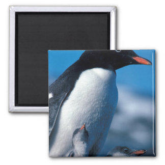 Antarctica, Sub-Antarctic Islands, South Square Magnet