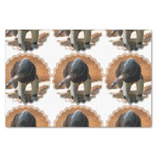 "Anteater 10"" X 15"" Tissue Paper"