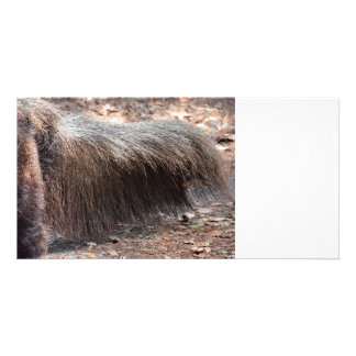 anteater animal tail closeup ant eater photo card template