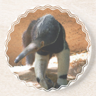 Anteater Coasters