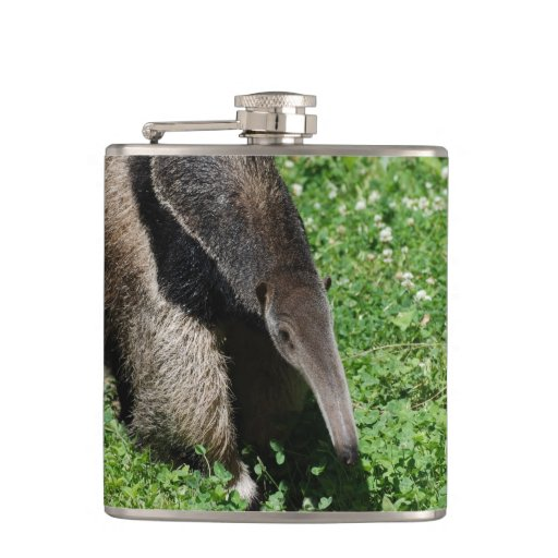Anteater Hip Flasks
