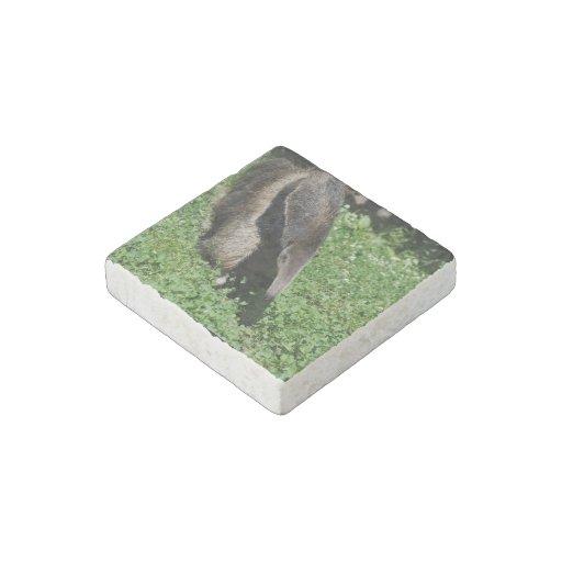 Anteater Stone Magnet