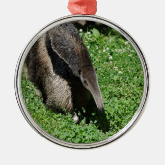 Anteater in Field Christmas Ornaments