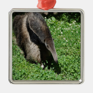 Anteater in Field Christmas Ornament