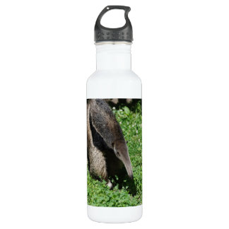 Anteater in Field 24oz Water Bottle