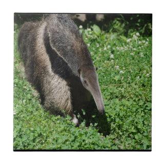 Anteater in Field Tiles
