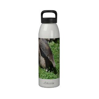 Anteater in Field Drinking Bottles