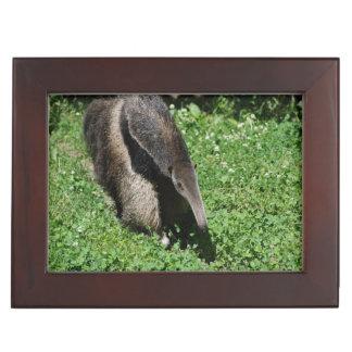 Anteater Memory Box