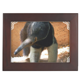Anteater Memory Boxes