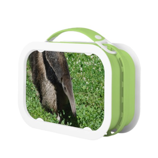Anteater Lunch Boxes
