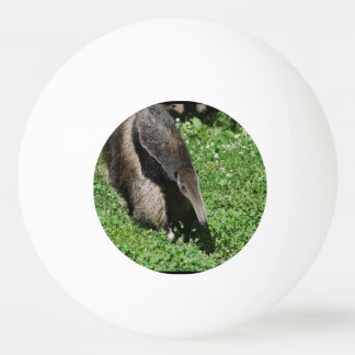 Anteater Ping Pong Ball