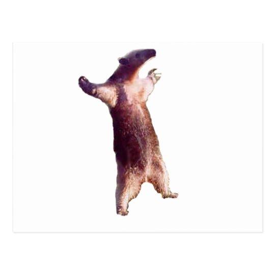 Anteater Postcard