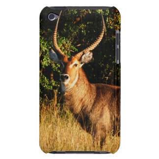 antelope buck waterbuck iPod touch cases