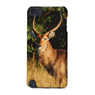 antelope buck waterbuck iPod touch 5G cover