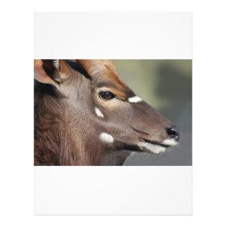 Antelope close up 21.5 cm x 28 cm flyer