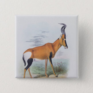 Antelope, from 'The Book of Antelopes', 15 Cm Square Badge