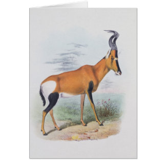 Antelope, from 'The Book of Antelopes', Card